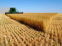 Пшеница 3, 4 кл. , крупы /горох, гречка/, мука - фото 1
