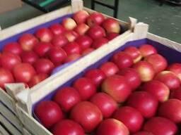 Яблоки из Польши! - фото 7