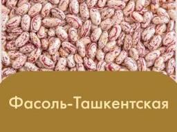 Фасоль Ташкентская (Королевский сорт 2020)