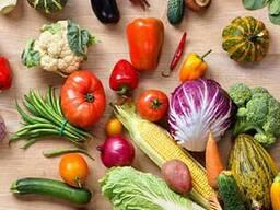Голландские семена овощных культур.