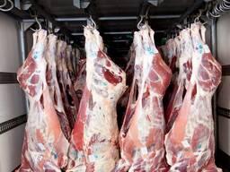 Говядина на кости, блочное мясо говядины, говяжий ливер.