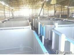 Инкубационный цех для лососевых