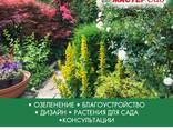 Ландшафтный дизайн, озеленение - photo 2