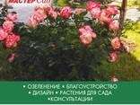 Ландшафтный дизайн, озеленение - photo 5