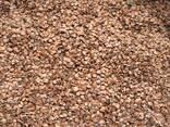 Álnus glutinósa , Семена ольхи, ольха семена, ольха черная семена, семена ольхи клейкой - фото 1