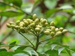 Масло нима (neem oil) природный инсектицид - фото 1