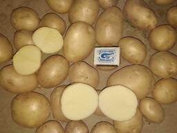 Молодая картошка из Узбекистана