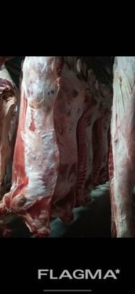 Мясо говядины, п\туши, охл, зам, Беларусь