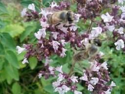Натуральный горный мёд с собственной пасеки. . - фото 5