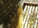 Продается Токтогульский горный мед оптом и в розницу - фото 3