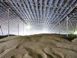 Продам пшеницу, лен, подсолнечник, рапс, ячмень