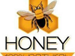 Продаю мёд оптом и в розницу. - фото 1