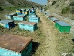 Продаю натуральный горный мед