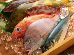 Рыба - фото 1