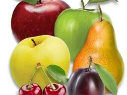 Саженцы яблони, груши, ... Проектирование садов и поддержка.