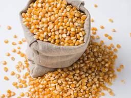 Семена Кукурузы, Продаём кукурузу в Кыргызстане