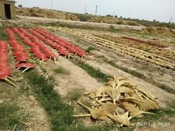 Сорго для производства веников