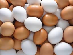 Яйцо столовое пищевое, С1, С2, С0, Беларусь, Россия