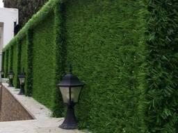 Зелёный Забор