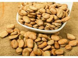 Зерно бобов