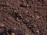 Железная руда агломерационная Fe 55-56 - фото 1